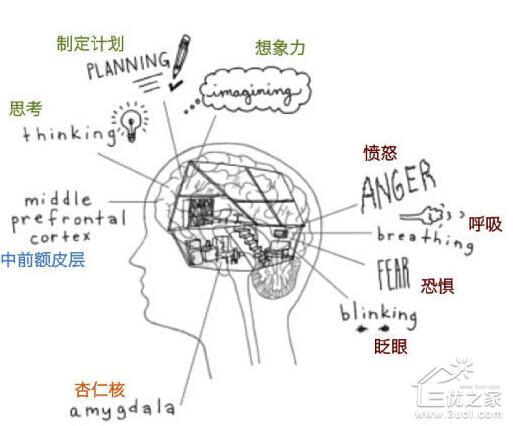 人脑结构图