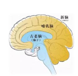大脑的记忆力培训