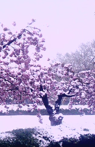 等一朵雪花盛开