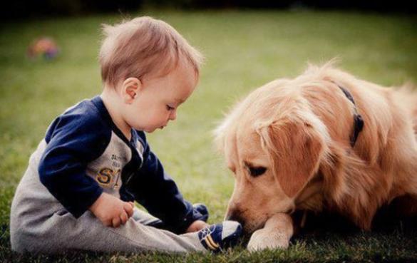 教宝宝动物图片