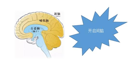 超级大脑 素材 ppt