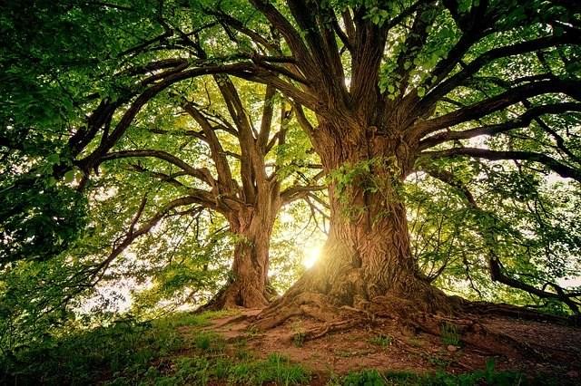 tree-3822149_640.jpg