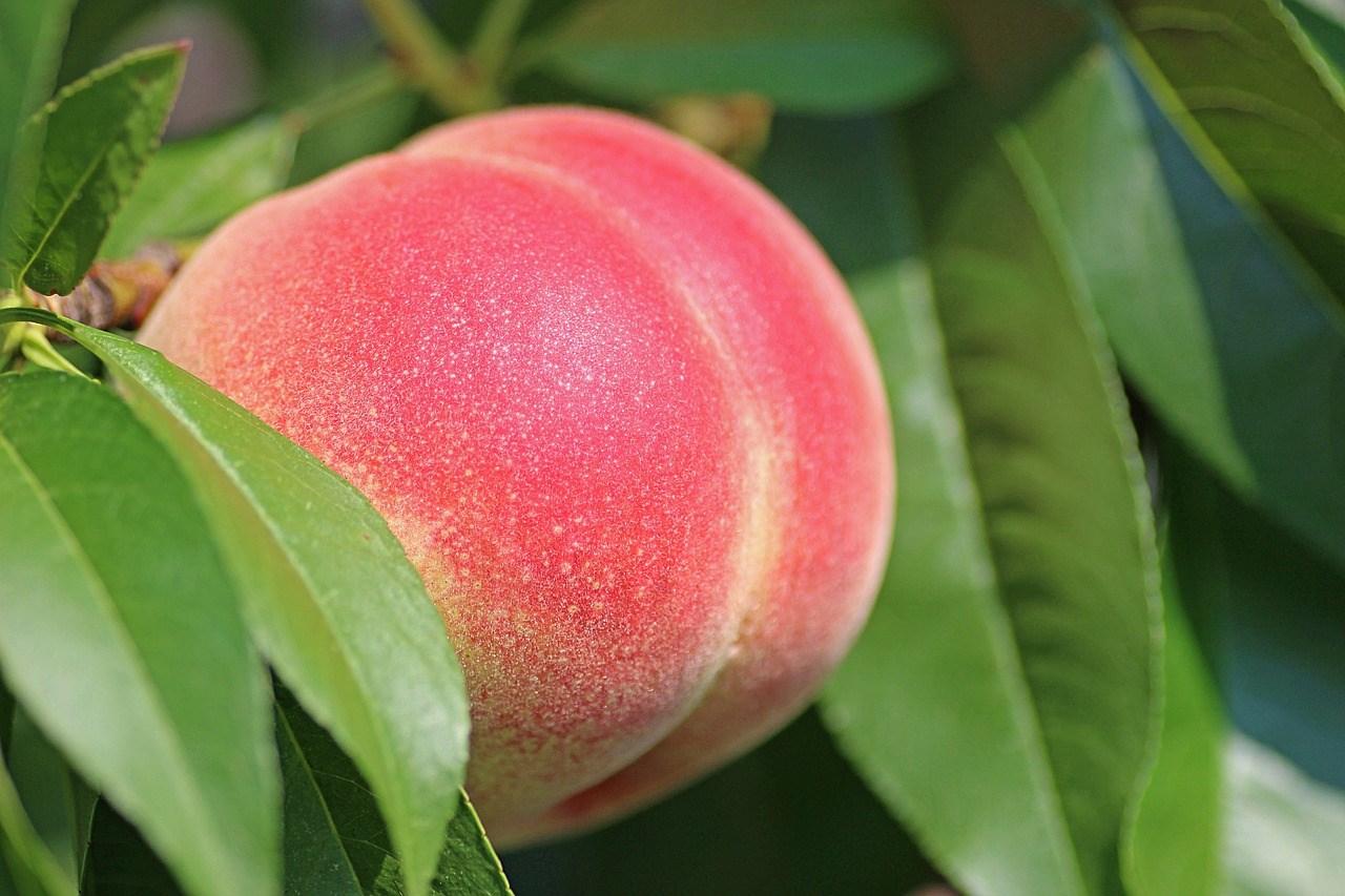 peach-2721852_1280.jpg