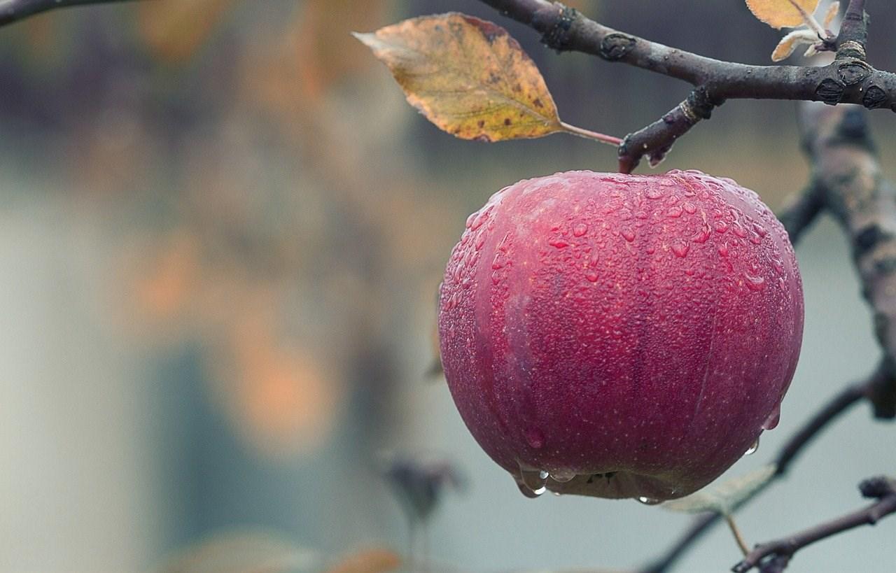 apple-1122537_1280.jpg